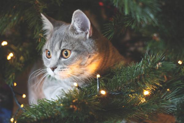 Why Do Cats Go Crazy for Holiday Décor? - Cat Empire