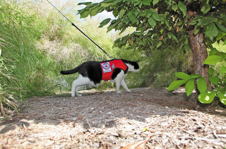 Henry the Search Cat is on the Case | Catster