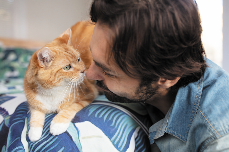 Does Your Cat Love You?   Catster