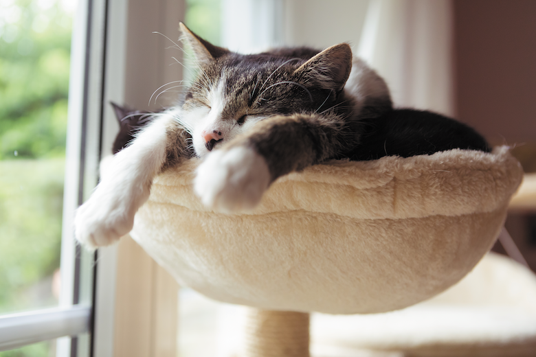 Why Do Cats Sleep So Much? | Catster