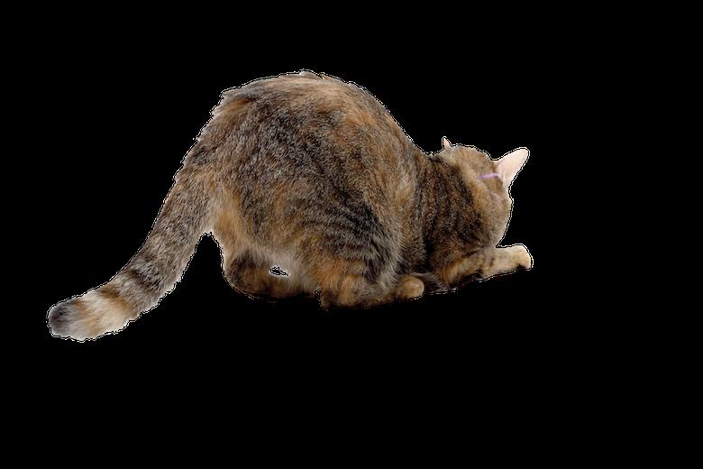 Weird Cat Behavior