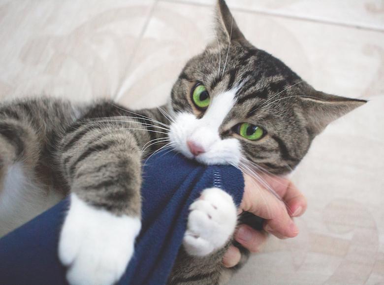 weird kitten behaviors