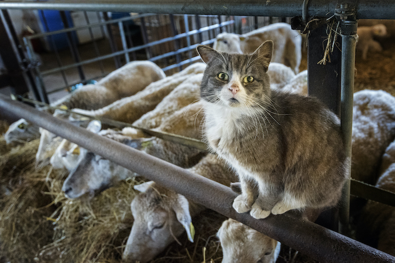 Help Barn Cats Through the Winter