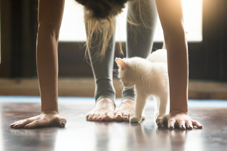 How Much Exercise do Cats Need?