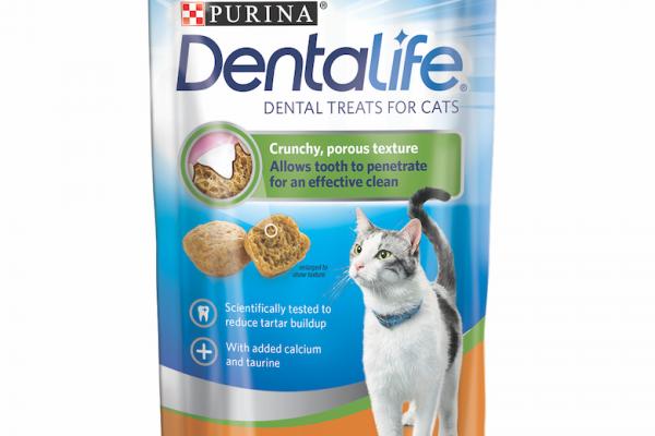 cat dental problems