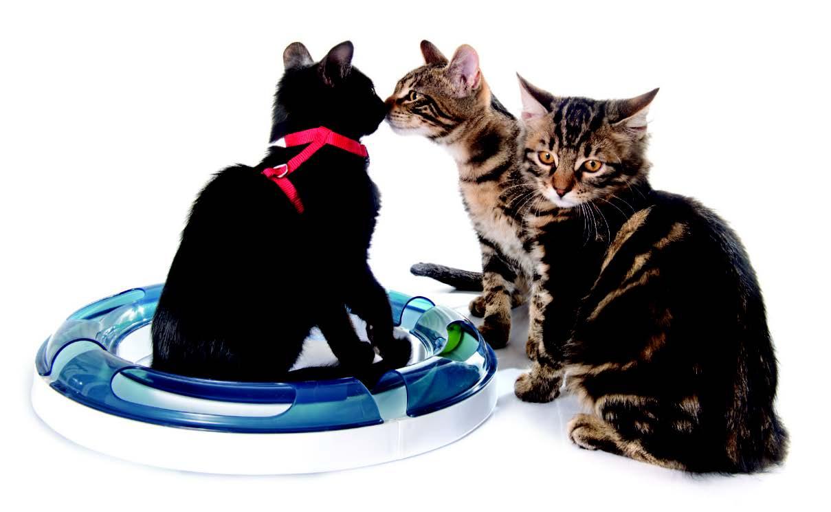 Kitten Socialization Secrets